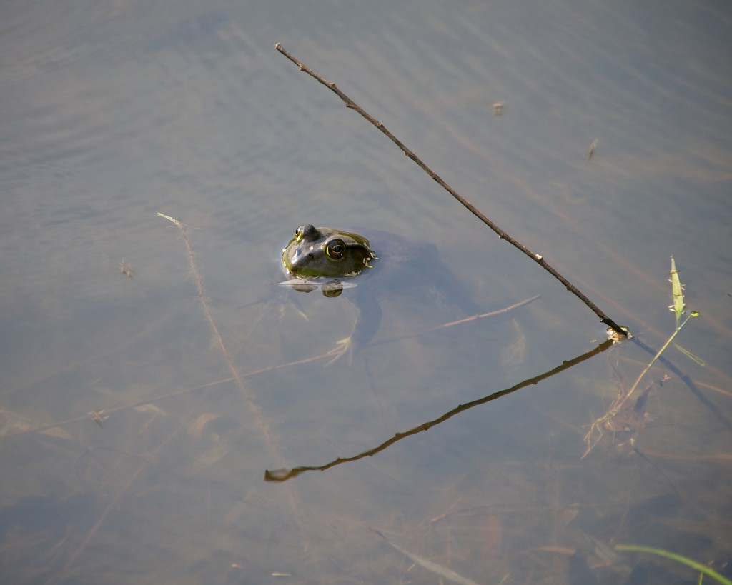 Frog is greater than (frog > stick)