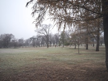 light fog across the park